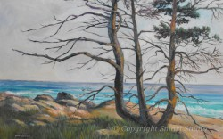 """Acadia Shores by Wini Smart24""""x36"""" Oil $3200  + tax and S&H"""
