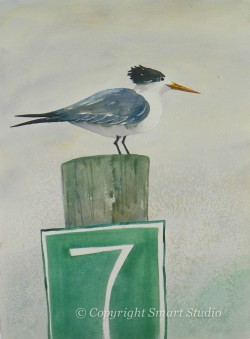 Royal Tern #7 by Gail Cleveland