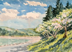 Apple Trees in Bloom watercolor by Gail Cleveland